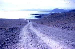 Sea of Cortez c1964